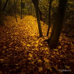 Autumn Fantasy : The Yellow Leaves Road (Photo : Gilderic)