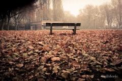 Autumn Fantasy : Banc de Brume (Photo : Gilderic)