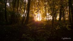 Autumn Fantasy : The Light Behind the Trees (Photo : Gilderic)