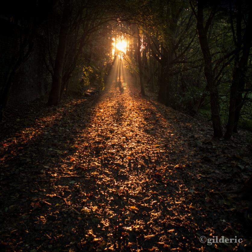 Autumn Fantasy : Let The Light Guide You (Photo : Gilderic)