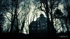 Mystère derrière les arbres (Liège, Belgique) - Photo : Gilderic