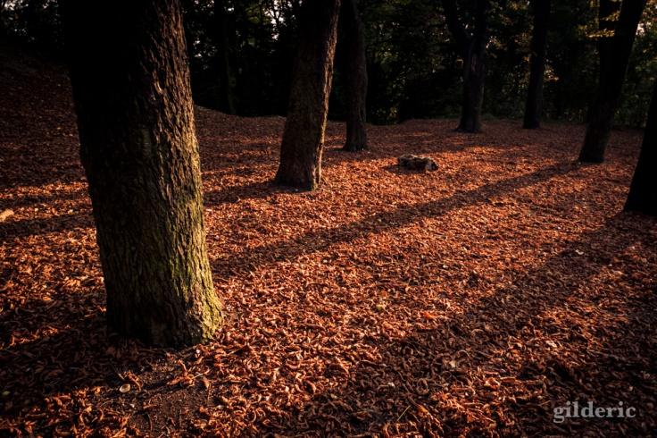 Ombres d'automne - Bois des Oblats - Photo : Gilderic