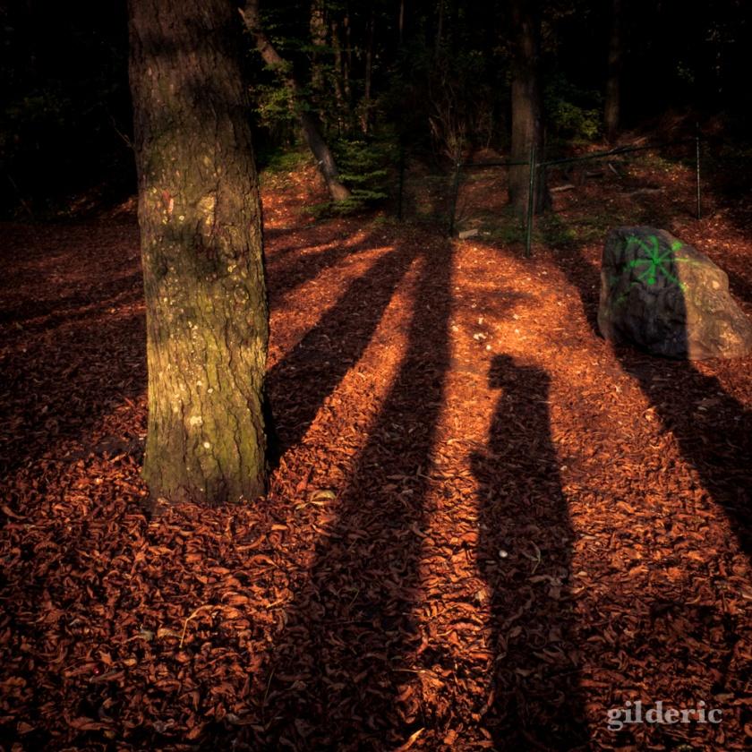 Fantôme d'automne - Bois des Oblats - Photo : Gilderic