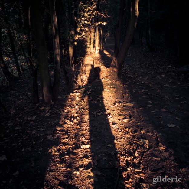 L'ombre - Bois des Oblats - Photo : Gilderic