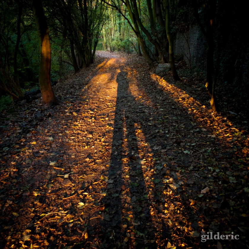 Vers la lisière - Bois des Oblats - Photo : Gilderic