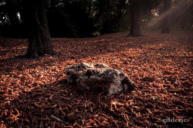 La pierre - Bois des Oblats - Photo : Gilderic