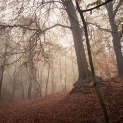 Autumn Fantasy : Misty Sunday - Photo : Gilderic