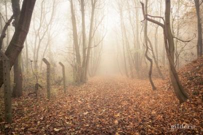 Autumn Fantasy : Misty Sunday - Photo : Gilderic