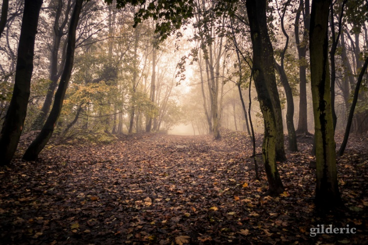 Autumn Fantasy : le chemin - Photo : Gilderic