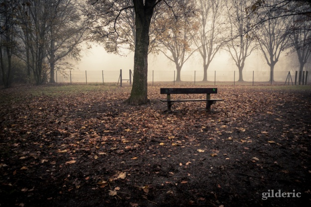 Autumn Fantasy :le banc et les arbres - Photo : Gilderic