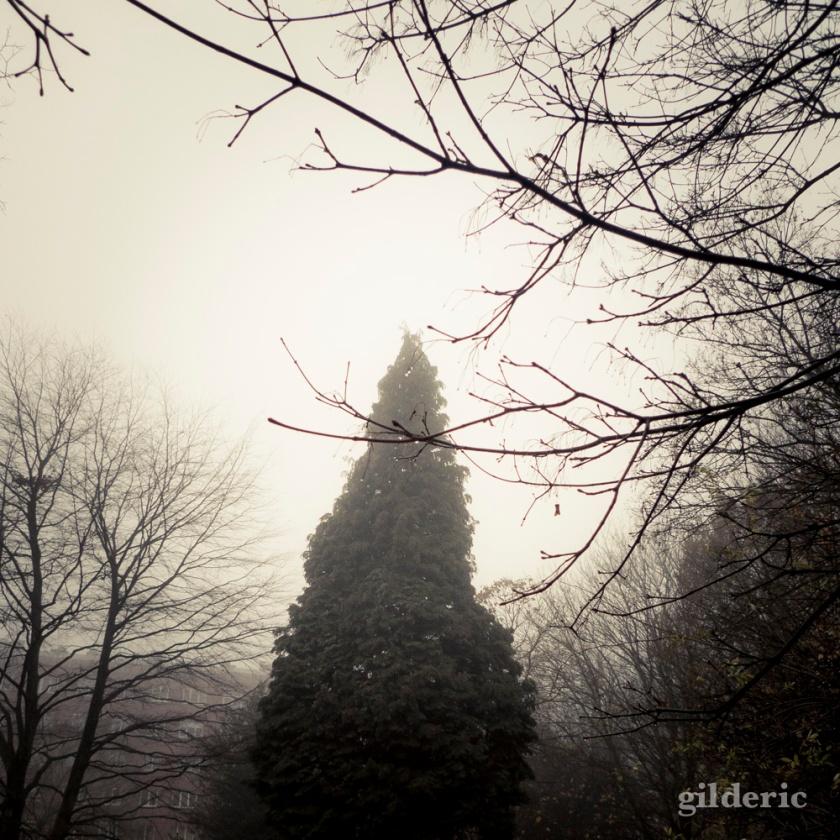 Autumn Fantasy : l'Arbre et les Fantômes - Photo : Gilderic