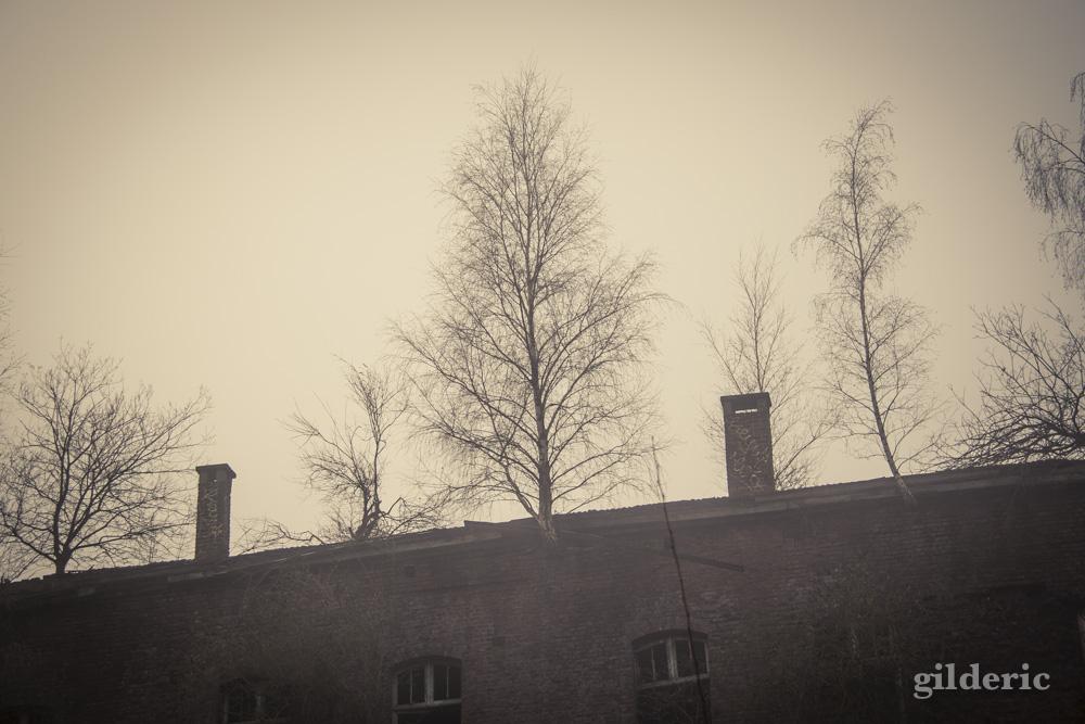Fort de la chartreuse, Liège, dans la brume - Photo : Gilderic Des arbres sur le toit
