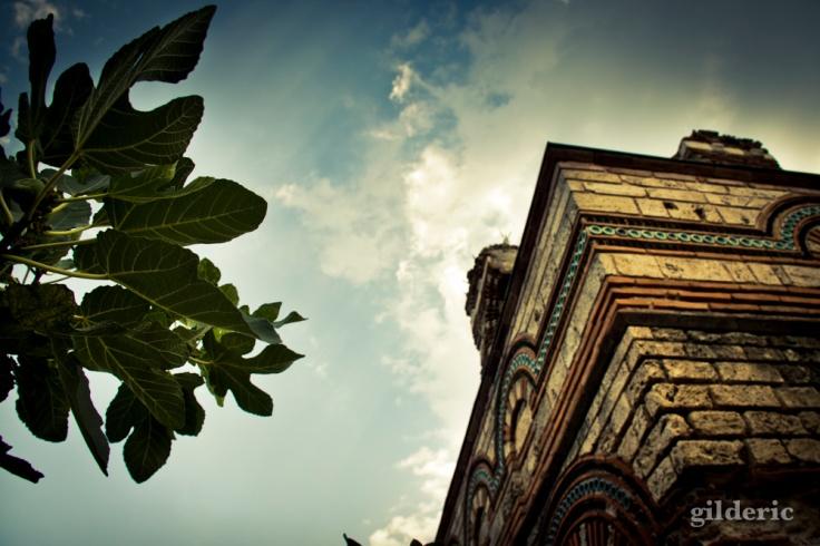 Arbre et architecture byzantine, à Nessebar (Bulgarie)