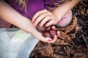 Autumn Fantasy : la petite fille et les marrons