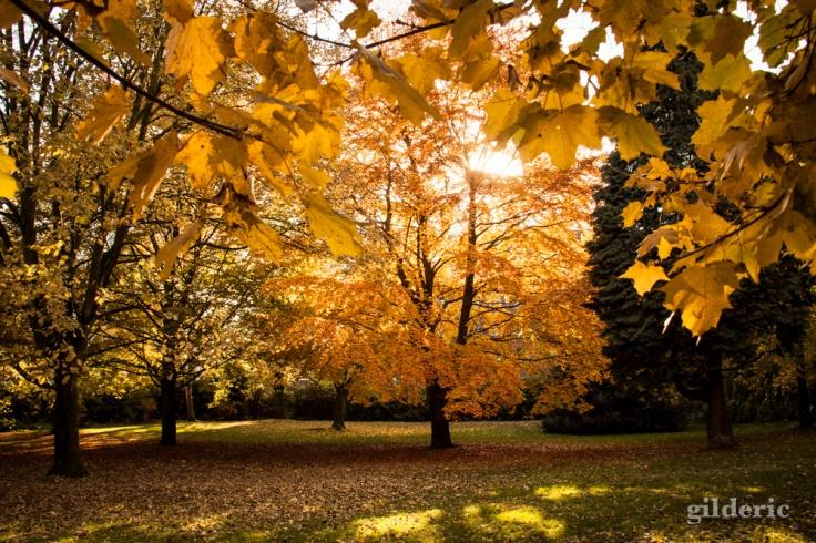 Lumière d'automne - Domaine de la Chartreuse (Liège) - Photo : Gilderic