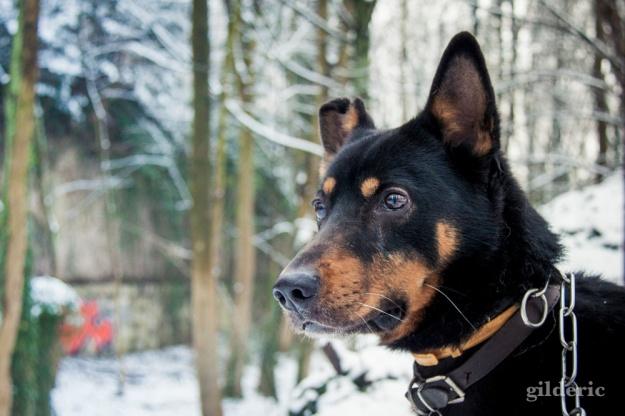 Photographier la neige (le chien) - Photo : Gilderic