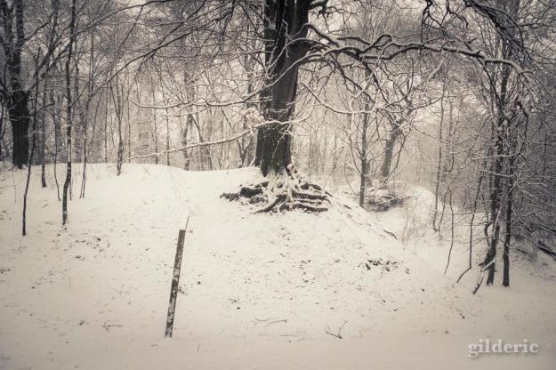 Photographier la neige (laChartreuse, Liège) - Photo : Gilderic
