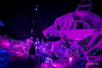 Tigre - Disneyland Ice Dreams - Photo : Gilderic
