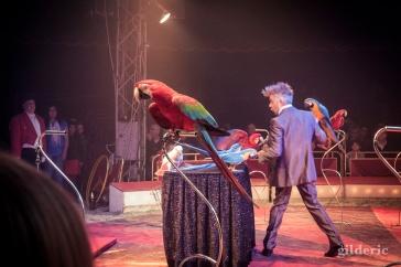 Perroquets - Festival Européen du Cirque Liège