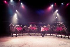 Chameaux - Festival Européen du Cirque Liège