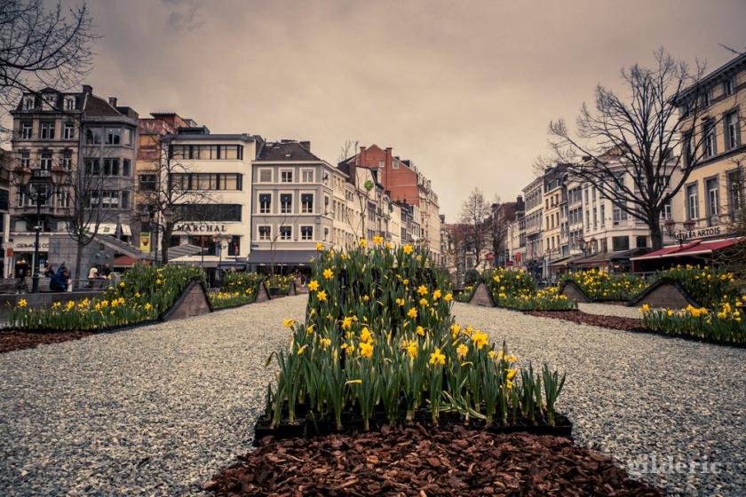 Parterre de fleurs à Liège - photo : Gilderic