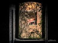 Fenêtre sur cour (le graffeur) - La Chartreuse