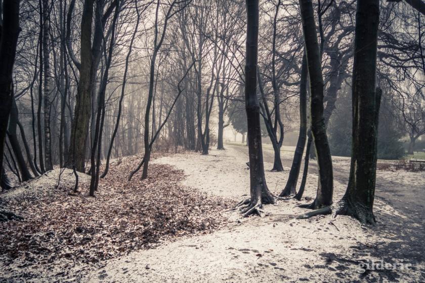 neige-brouillard-1