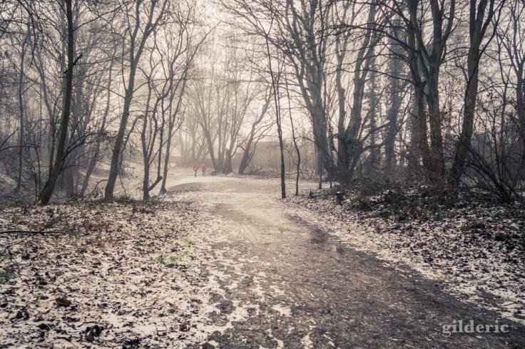 Neige et brouillard (parc de la Chartreuse, Liège)