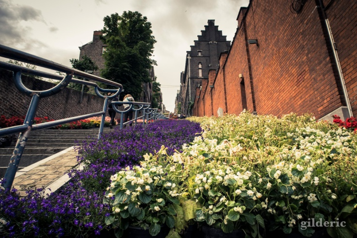 Bueren en fleurs (Liège)