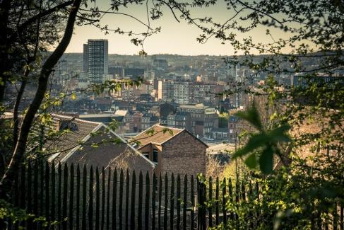 Ombres et lumières, végétal et ruines à la Chartreuse