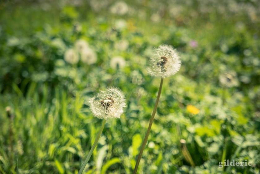 Mise au vert parmi les fleurs