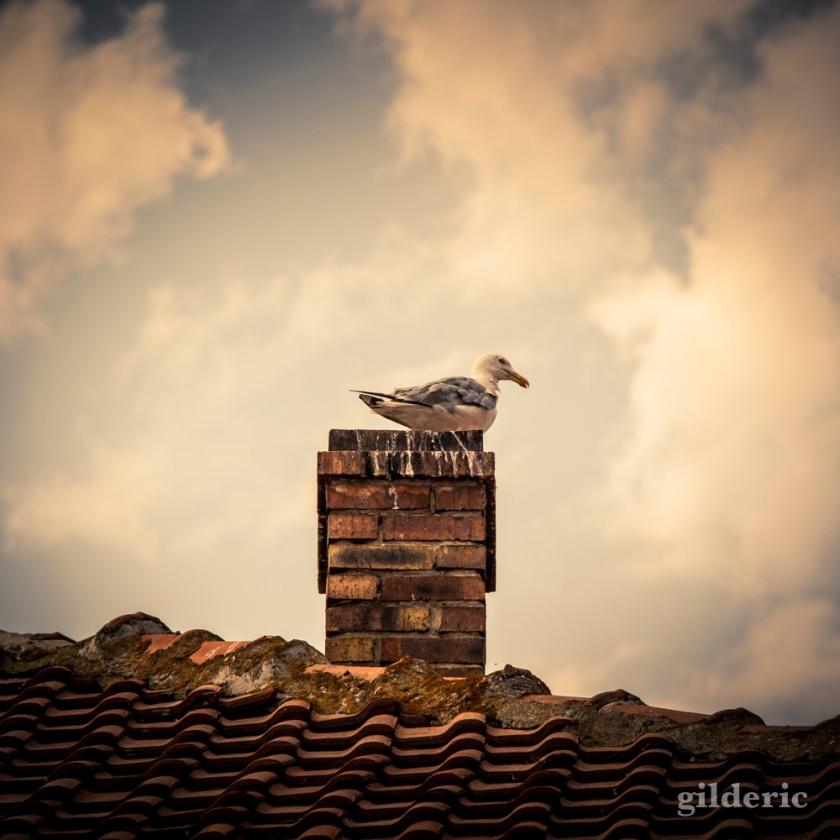 Cigogne sur une cheminée