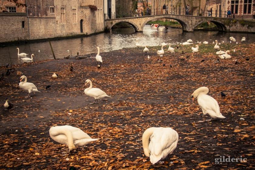 Les Cygnes de Bruges