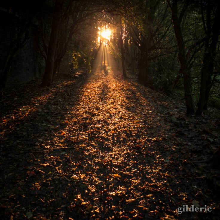 Matin d'automne (Parc de la Chartreuse, Grivegnée)