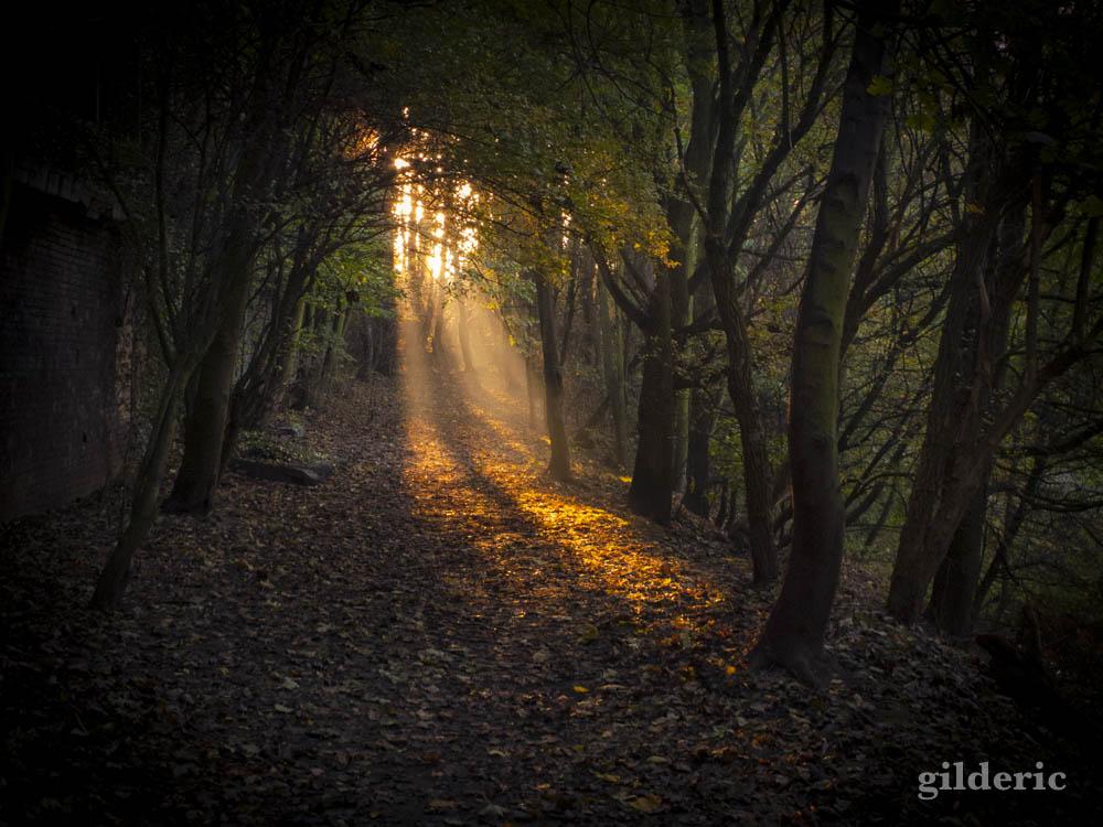 Autumn Fantasy :lumière et couleurs d'automne