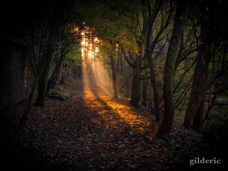 Autumn Fantasy : lumière et couleurs d'automne