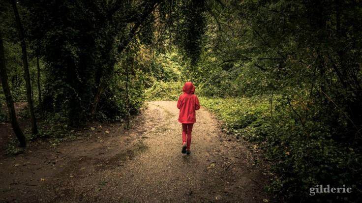 Chaperon rouge dans les bois