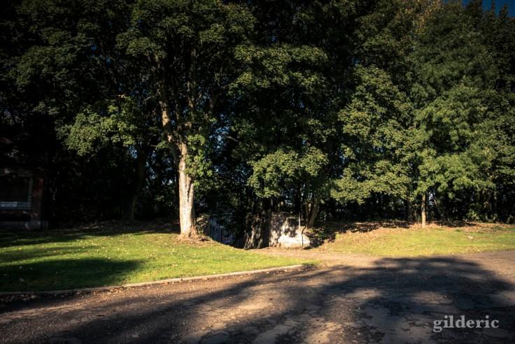 Ombres et lumière de l'été indien (La Chartreuse, Liège)