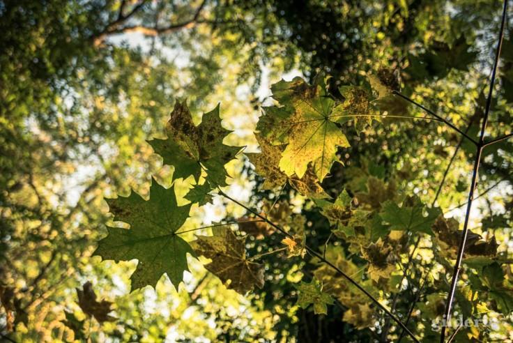 La lumière d'été et les feuillages d'automne (La Chartreuse)
