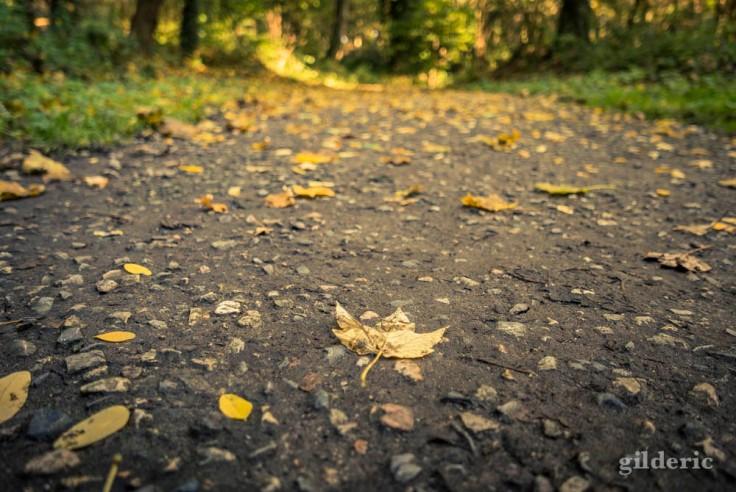 Eté indien (sur le chemin de l'automne (La Chartreuse, Liège)