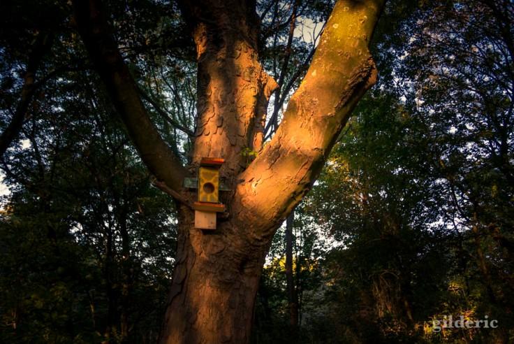 L'arbre au nichoir (La Chartreuse, Belgique)