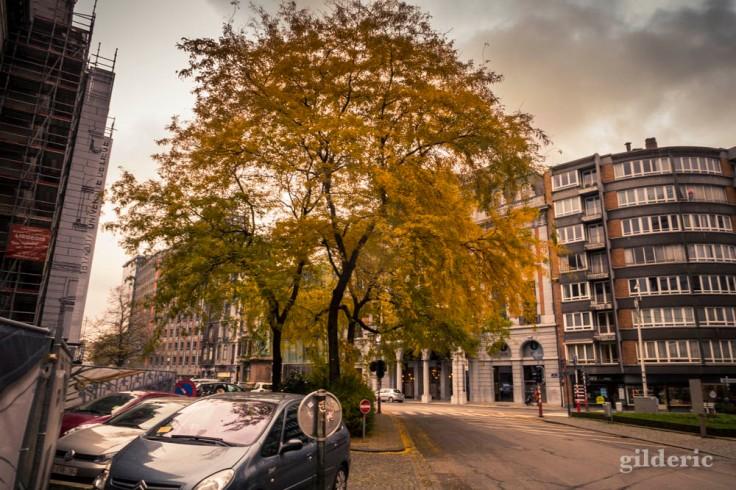 Photographier les arbres en ville en automne