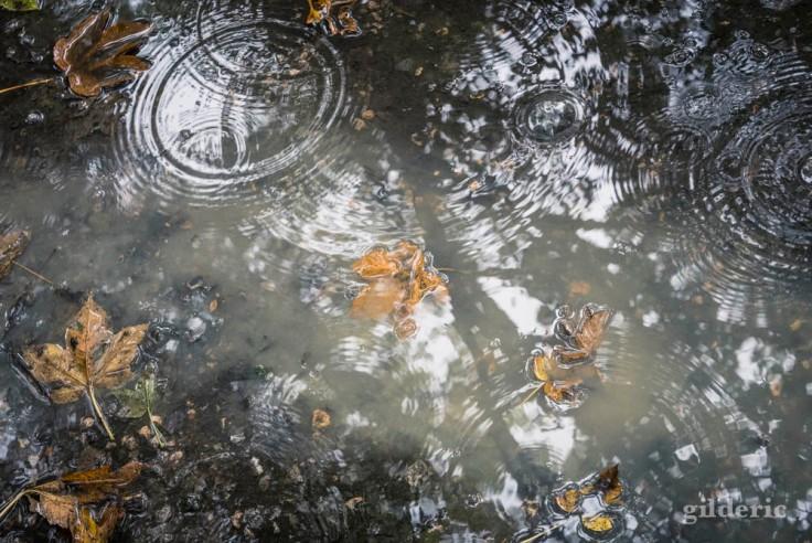 Pluie et flaque d'eau en automne (La Chartreuse, Liège)