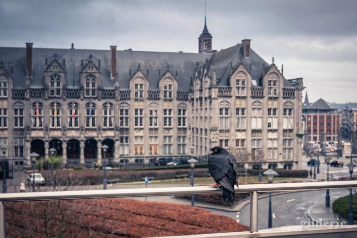 L'oiseau et les Princes-Evêques (Liège)