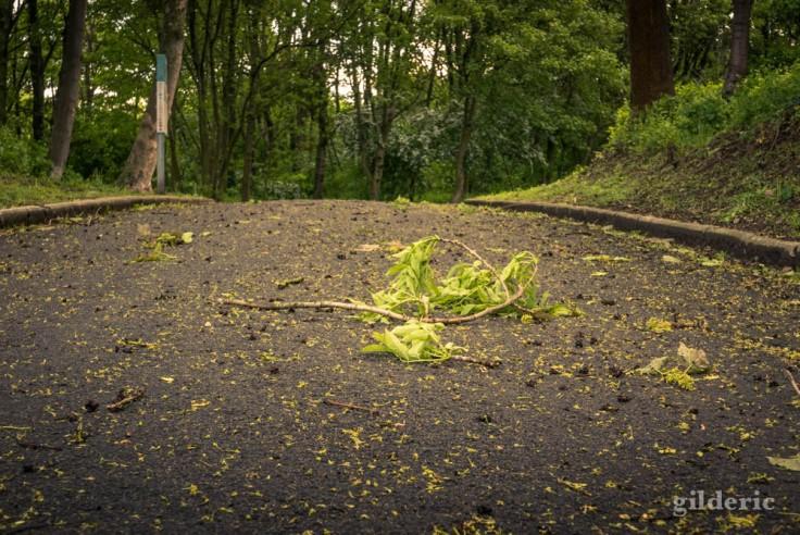 Nos espaces verts sont-ils en danger ?
