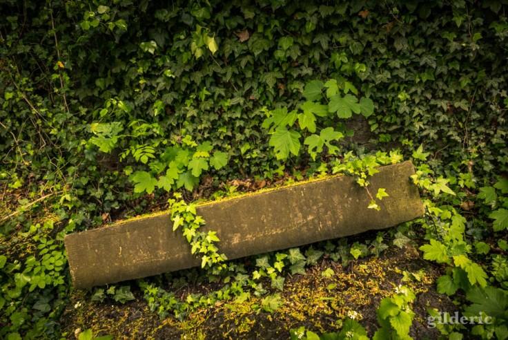 Lierre et vieilles pierres (de la Chartreuse)