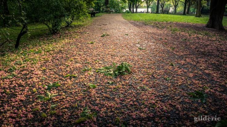 Fleurs et feuilles tombées après la tempête (La Chartreuse, Liège)