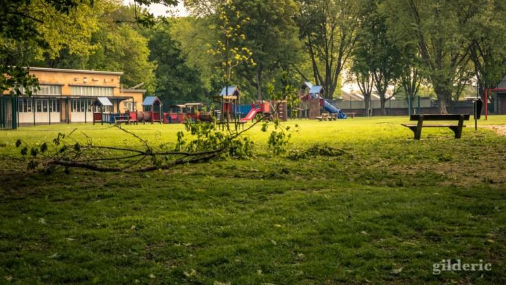 Arbre tombé à la plaine de jeux (Péville, Liège)