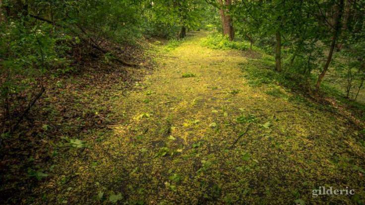 Du jaune et du vert, sur le sentier de la Chartreuse