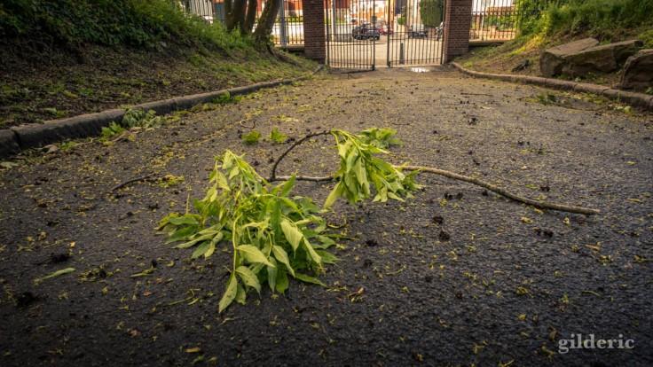 Branche cassée (après la tempête) -La Chartreuse, Liège